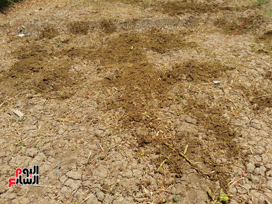 جفاف الترع بقرية مزاتا فى سوهاج (1)