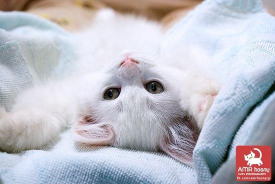 قطط ـ صور قطط ـ صور عمرو حسنى  (1)