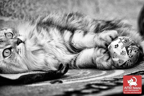 قطط ـ صور قطط ـ صور عمرو حسنى  (10)