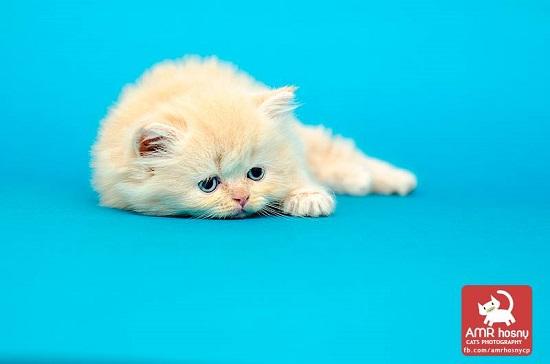 قطط ـ صور قطط ـ صور عمرو حسنى  (11)