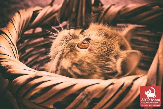 قطط ـ صور قطط ـ صور عمرو حسنى  (3)