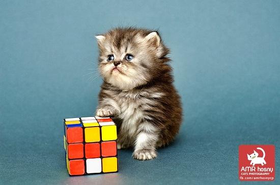 قطط ـ صور قطط ـ صور عمرو حسنى  (4)