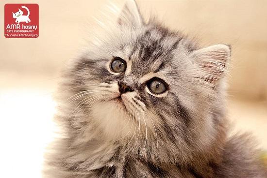 قطط ـ صور قطط ـ صور عمرو حسنى  (6)