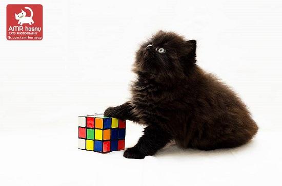 قطط ـ صور قطط ـ صور عمرو حسنى  (7)