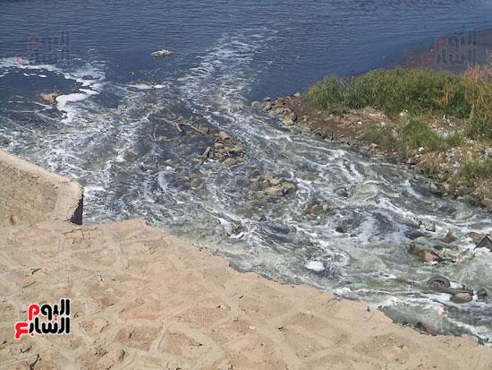1كارثة بيئية تلوث مياه النيل بأسوان (3)