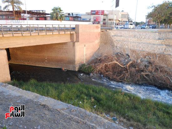 1كارثة بيئية تلوث مياه النيل بأسوان (5)