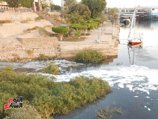 1كارثة بيئية تلوث مياه النيل بأسوان (6)