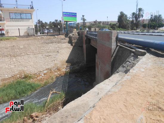 1كارثة بيئية تلوث مياه النيل بأسوان (7)