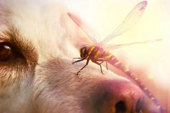 لذلك لا يتأزم الكلاب من وقوف إحداهم على أنفه على سبيل المداعبة -اليوم السابع -9 -2015