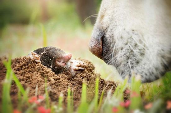 يميز الكلب بين الكائنات التى يتعامل معها من خلال حاسة الشم -اليوم السابع -9 -2015