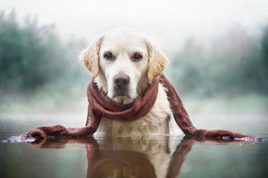 لكل هذه المميزات يعشق الشاب تصوير أنف كلبه -اليوم السابع -9 -2015