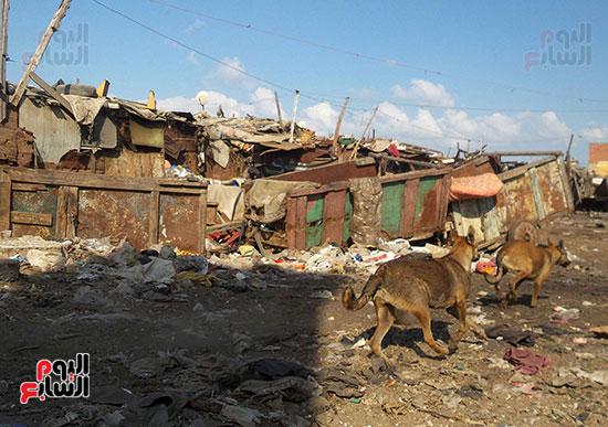 العشش-والقمامة-تملأ-المنطقة