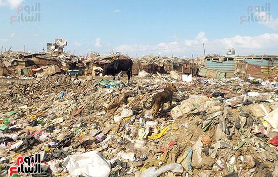 اكوام-من-القمامة-حول-عشش-الاهالي