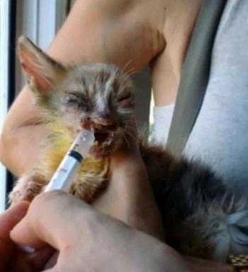 عمليات تجميل أنقذت حياة قطة (3)