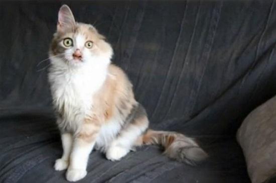 عمليات تجميل أنقذت حياة قطة (5)