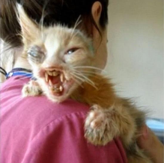 عمليات تجميل أنقذت حياة قطة (7)