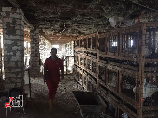 داخل إحدى مزارع الدواجن بقرية برما فى الغربية
