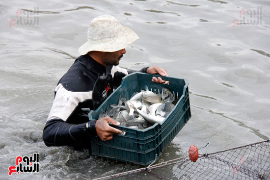 بشاير الخير من الأسماك
