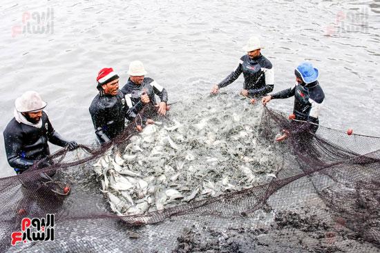 صيد الانتاج من الاسماك