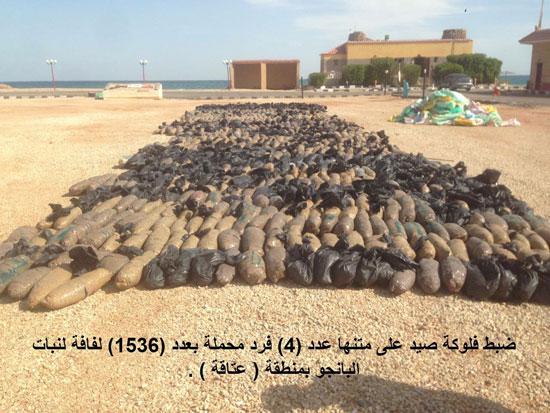 قوات حرس الحدود تدمر 7 أنفاق بسيناء وتضبط 685 مهاجرا غير شرعى بالسلوم (1)