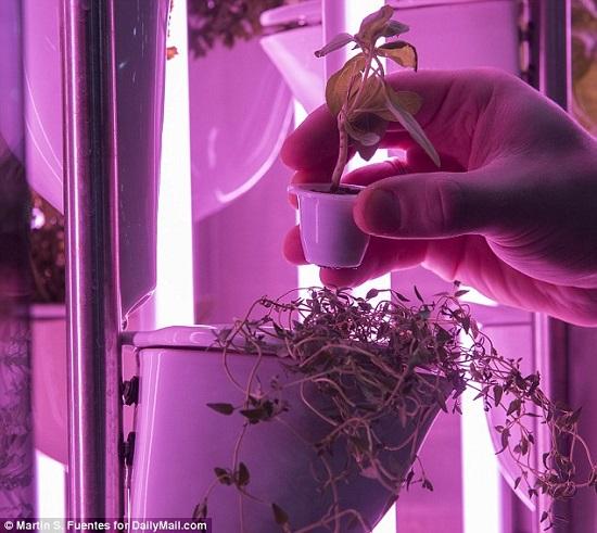 الكبسولات المستخدمة لنمو الأعشاب
