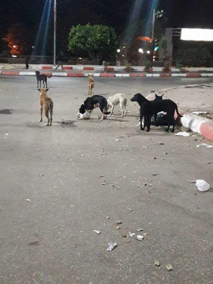 انتشار الكلاب يهدد المواطنين بالذعر