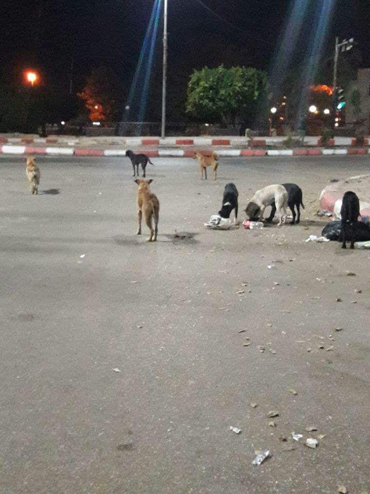 مجموعة من الكلاب الضالة فى شوارع أسوان