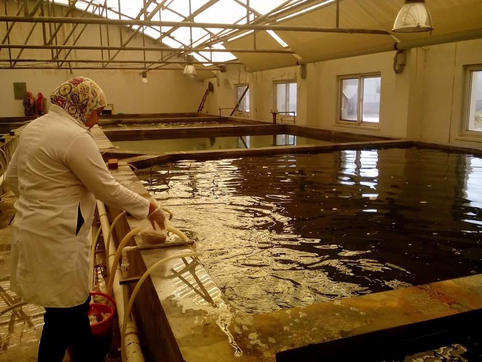 احواض الاستزراع السمكى بجامعة القناه