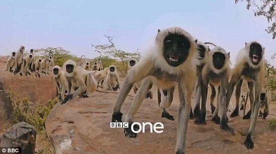 القردة تتفاعل مع الكاميرات