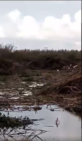تلوث بحيرة أدكو بالمخلفات والردم