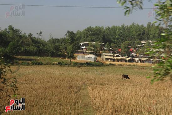 معسكرات الروهينجا (4)