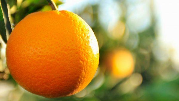 الطب البديل وقشر البرتقال