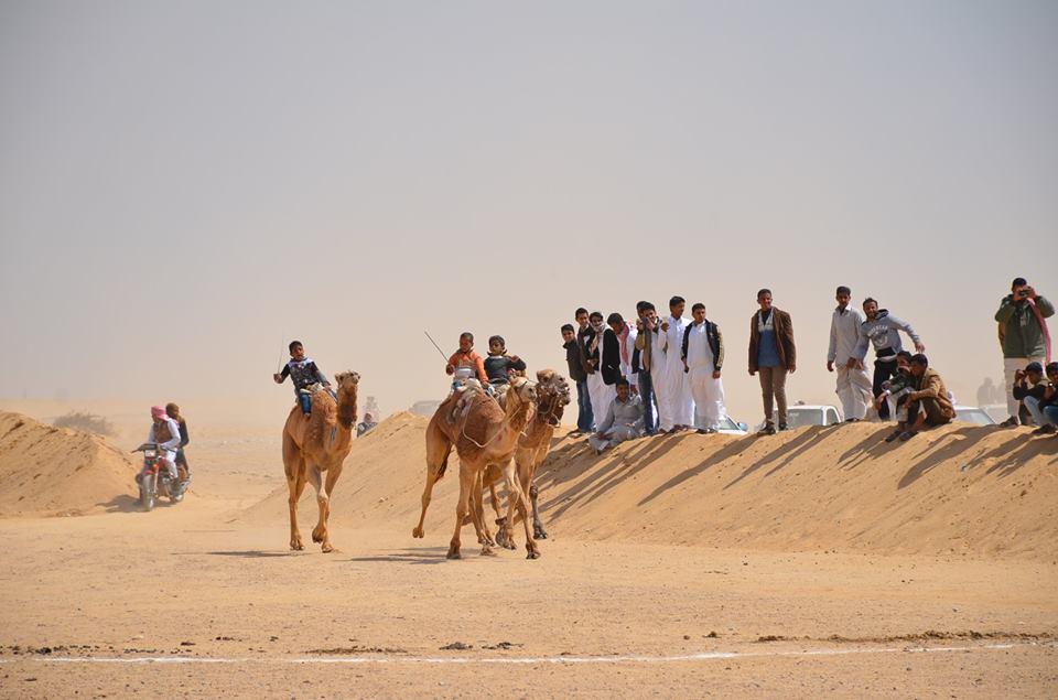 2- عشرات المتسابقين فى صحراء  سرابيوم