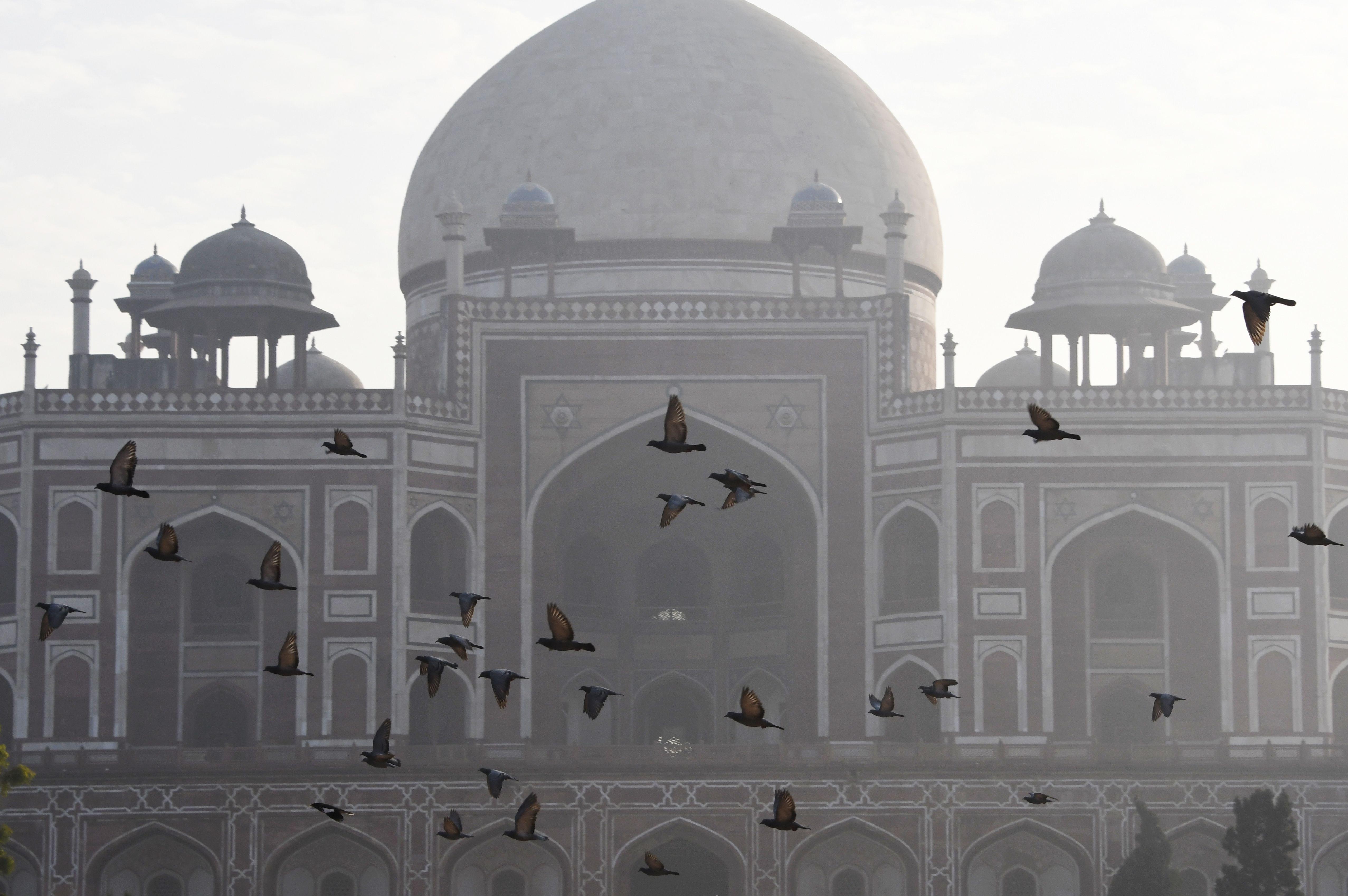 طيور تطير وسط الشبورة فى الهند أثناء زيارة صادق خان للمعبد الذهبى