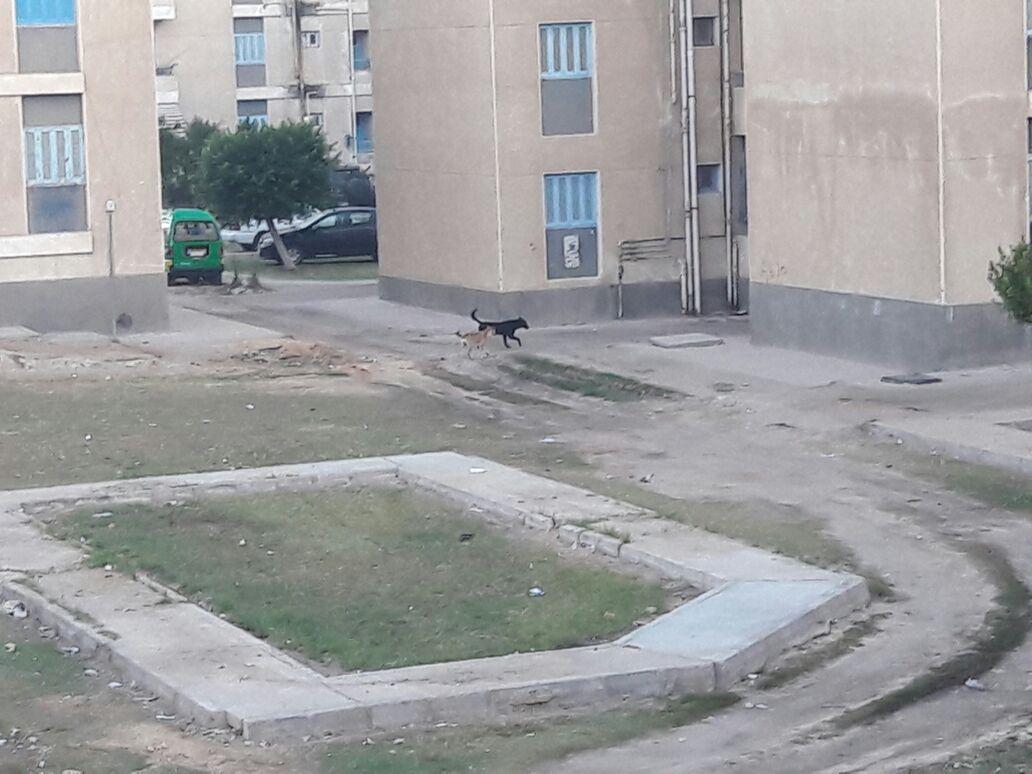 انتشار الكلاب الضالة  (4)