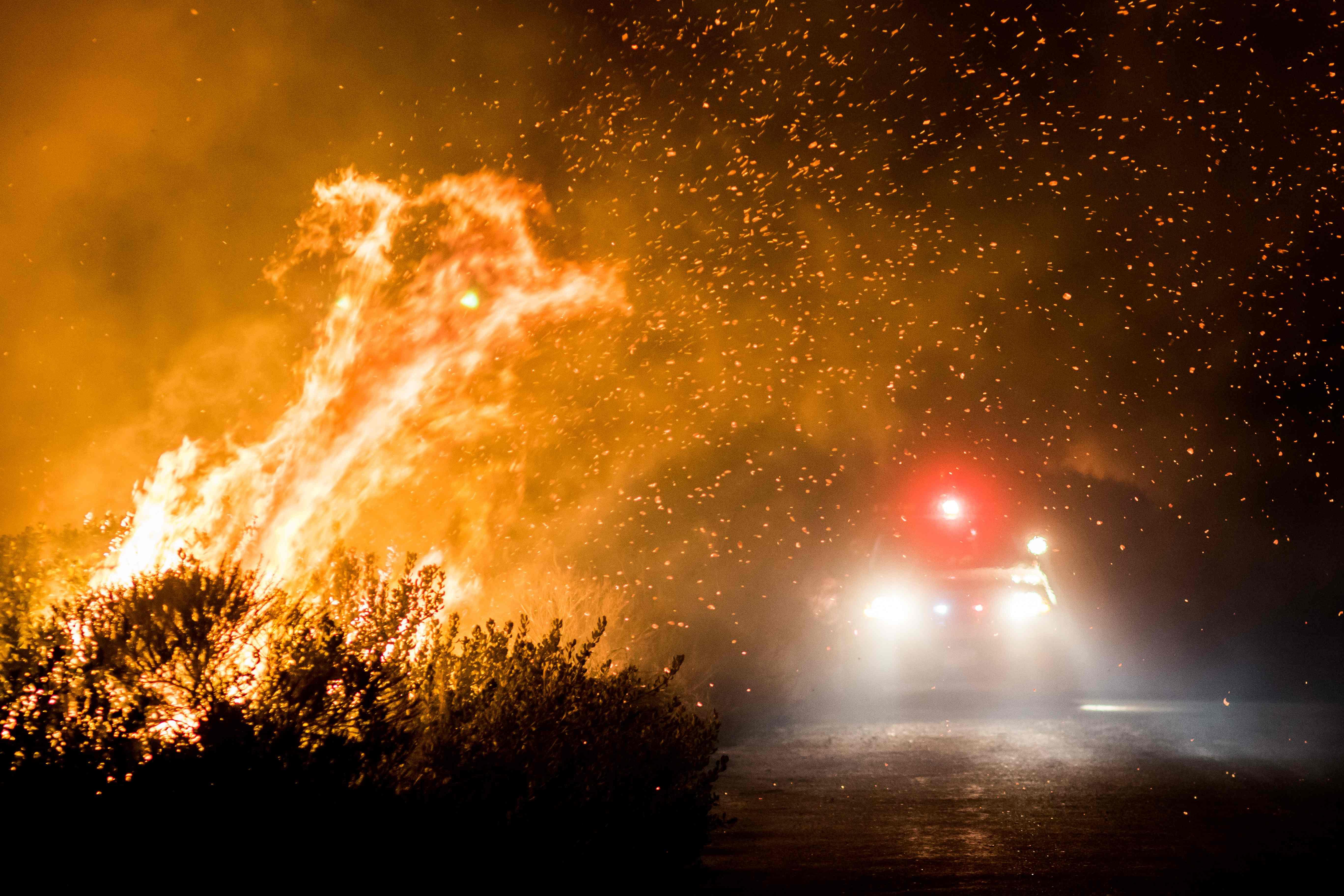 حرائق في الأشجار