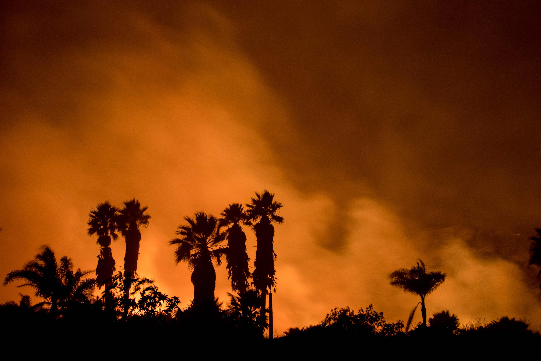 الحرائق تلتهم الأشجار