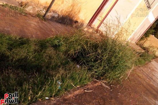 الحشائش تنمو على مياه الصرف الملوثة