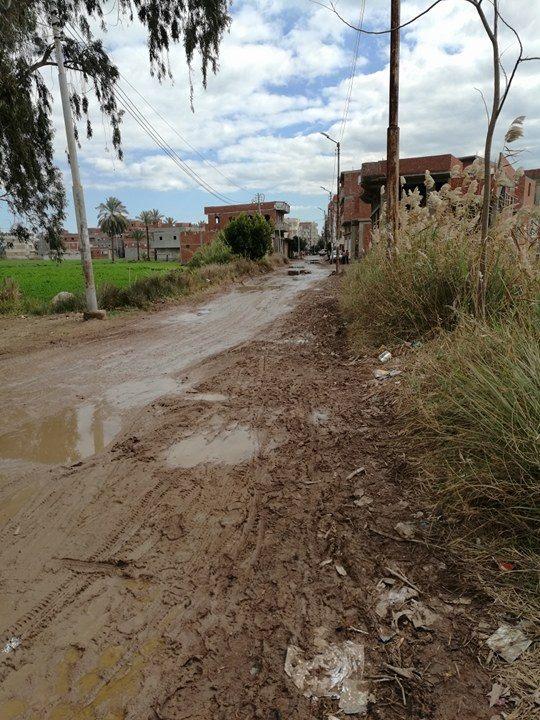 طريق فارسكور قرية المنشاوى