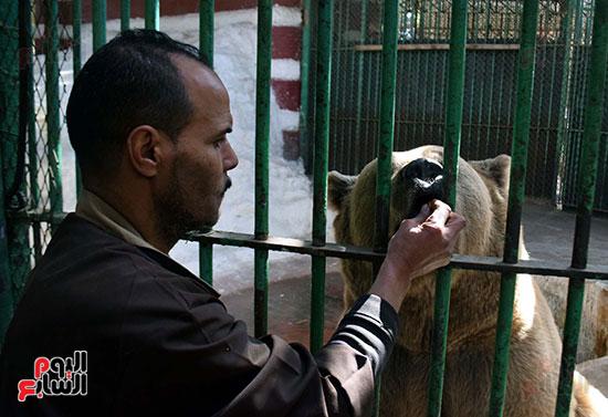 الحارس يطعم الدب