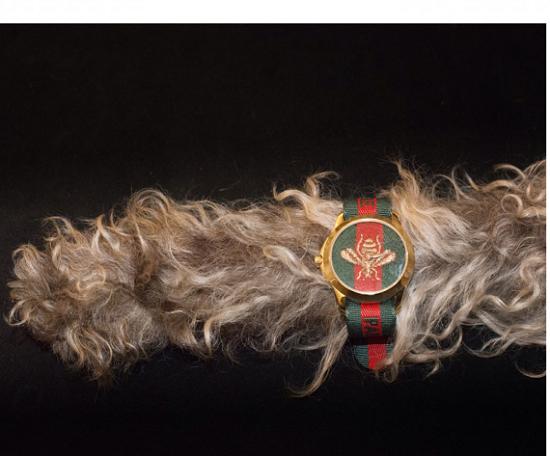 استعراض ساعة اليد بذيل احدى الحيوانات الاليفة