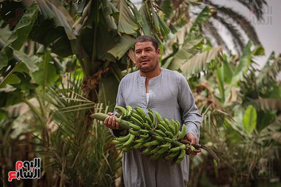 أحد العمال داخل جزيرة الموز