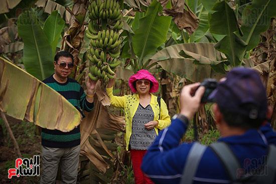 السياح سعداء داخل جزيرة الموز بالأقصر