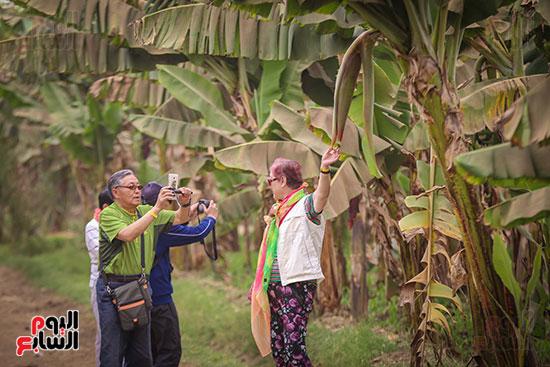 السياح يلتقطون الصور لشجر الموز