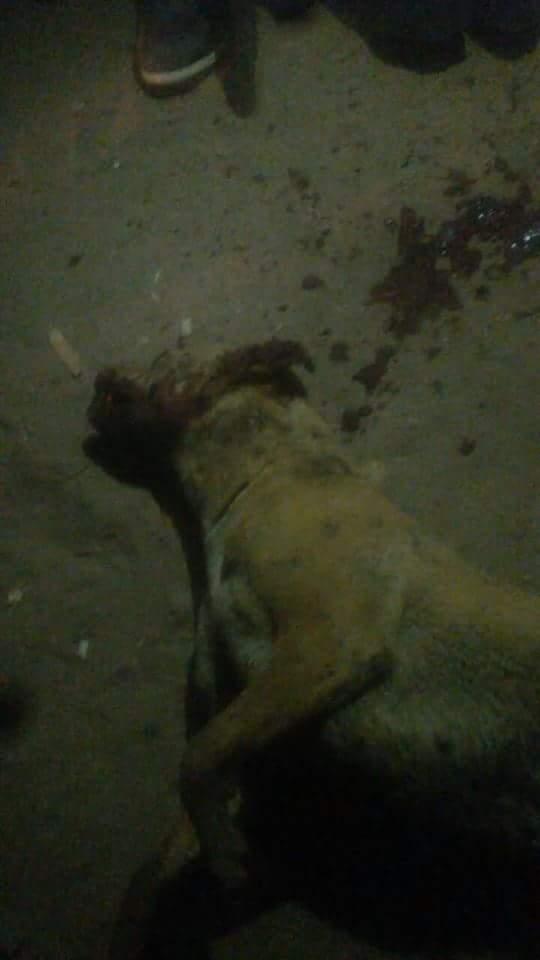 الكلب بعد قتله