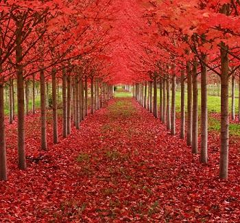 بالصور شاهد أجمل 16 شجرة حول العالم اليوم السابع