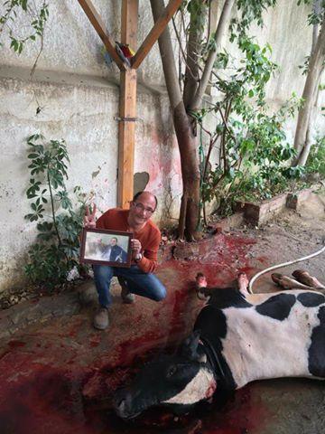 مؤيد لمبارك يذبح عجل وفاءان بالندر