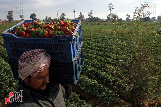 صاحب المزرعة  يشوف تحميل الانتاج