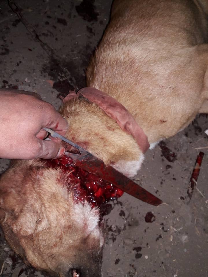 الكلب أثناء الذبح