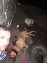 الشاب يلتقط سيلفى مع الكلب بعد الذبح
